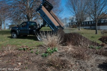 Existing borders are fertilized and topdressed with farm compost and a compost-based mulch every year to get the off to a good start for the season