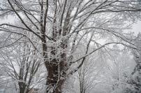 mjm-winter16