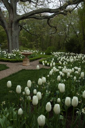 The purity of an all-white garden set against a boxwood framework is always classic.