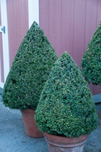 Tightly clipped boxwood provides a formal and stately look to the home.