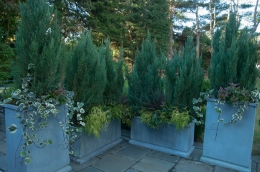 Tall native cedars under-planted with cascading evergreens and ivy to provide screening all winter.