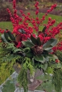 Sparkleberry stems provide the vertical interest and wonderful festive color
