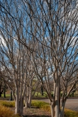 A grove of barren trees reveals wonderful structure and form.