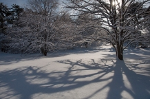 Winter light pours through trees casting wonderful long shadows.