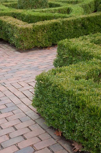 Boxwood provides wonderful structure and form to the garden in every season