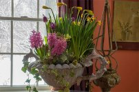 Potted spring bulbs fill the air with fragrance and foretell the coming spring