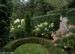 Late blooming hydrangea paniculata in shades of ivory and pearly pinks are a lovely contrast to an enclosed boxwood garden.