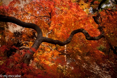 The brilliance of Autumn needs to be savored and revered because it is so fleeting.